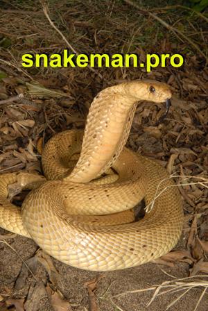 Snake course